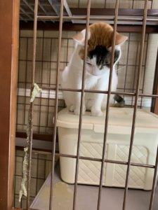 三毛猫 嘔吐 猫 吐いた ウールサッキング ウールチューイング 誤飲 誤食