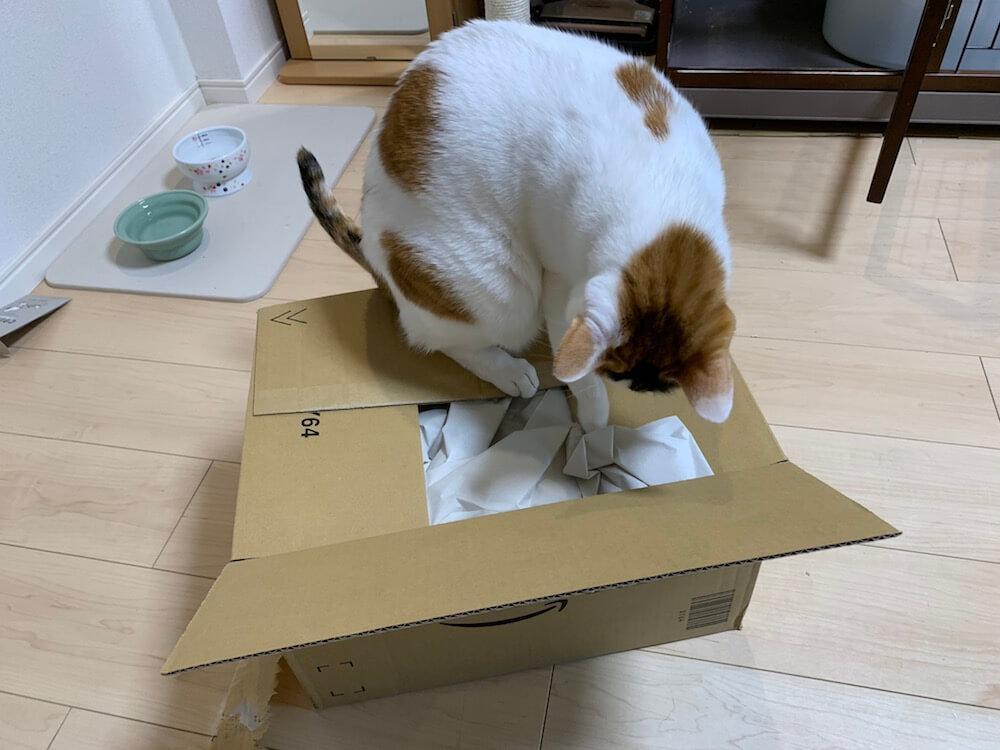 Amazon プライム会員 プライムペット primepets お試しBOX 猫ちゃんBOX 購入 三毛猫 キジ白