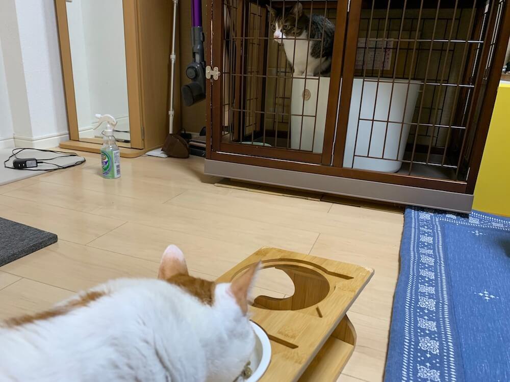 三毛猫 嘔吐 猫 吐いた ウールサッキング ウールチューイング 誤飲 誤食 キジ白