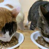 猫 ペット 洗剤 食器 洗い 皿