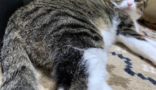 猫の後ろ足の毛がハゲてる!?皮膚病?ストレス?気になって病院で診てもらった結果・・・