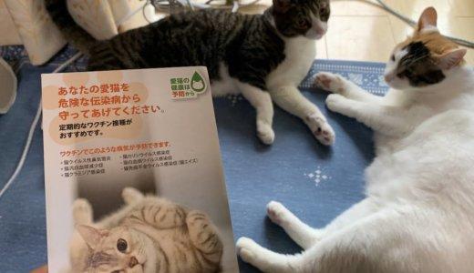 室内飼いだと猫ワクチンは必要ない?という考えも有りますが、あめつゆの定期検診だと思ってます!