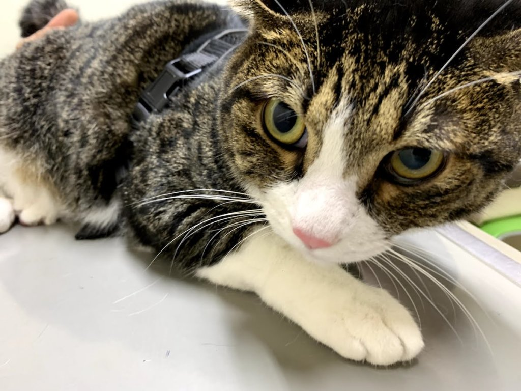 猫 ワクチン コアワクチン 3種混合