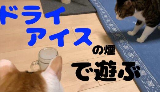 猫とドライアイスのモクモクスモークで遊んでみた!遊ぶ時には換気と凍傷に注意しよう!