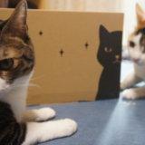 PetProfiles Amazon 試供品BOX 開封 三毛猫 キジ白