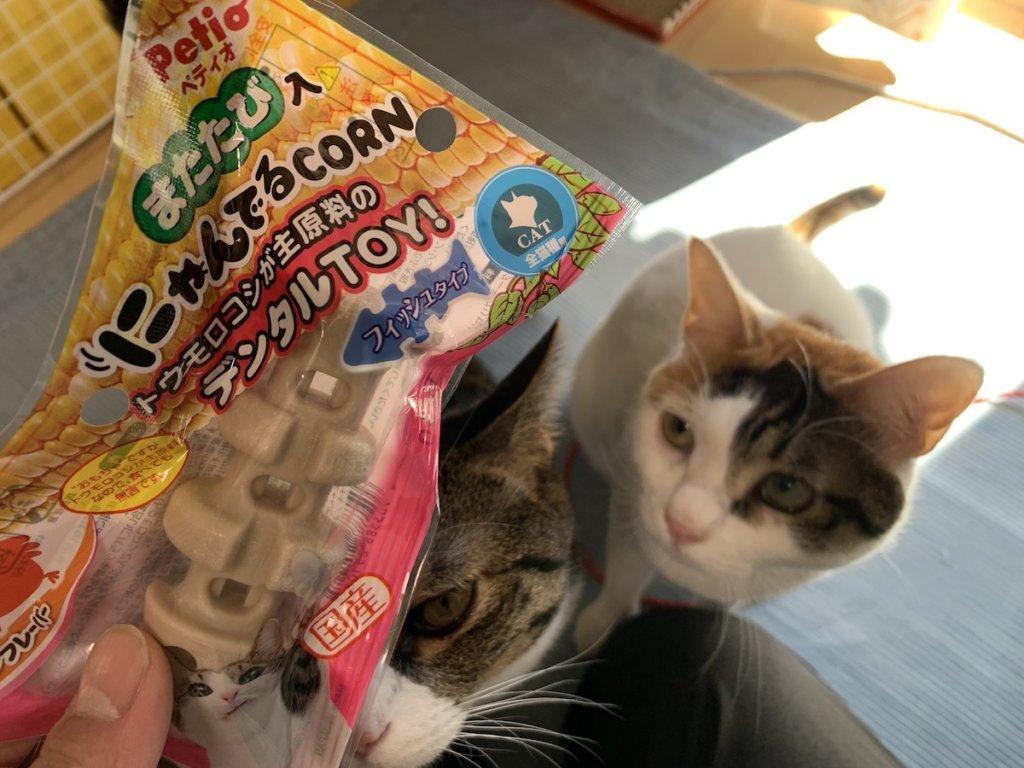 にゃんでる CORN コーン レビュー 感想 三毛猫 キジ白 ペティオ Petio