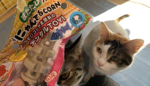 「にゃんでるCORN」食べても大丈夫な猫のおもちゃで誤食しやすくても安心です!