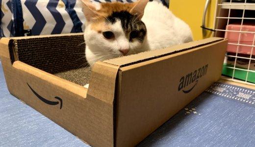 猫が大好きなAmazonのダンボールの爪とぎが登場!「Amazonボックスつめみがき」がめっちゃ良き!