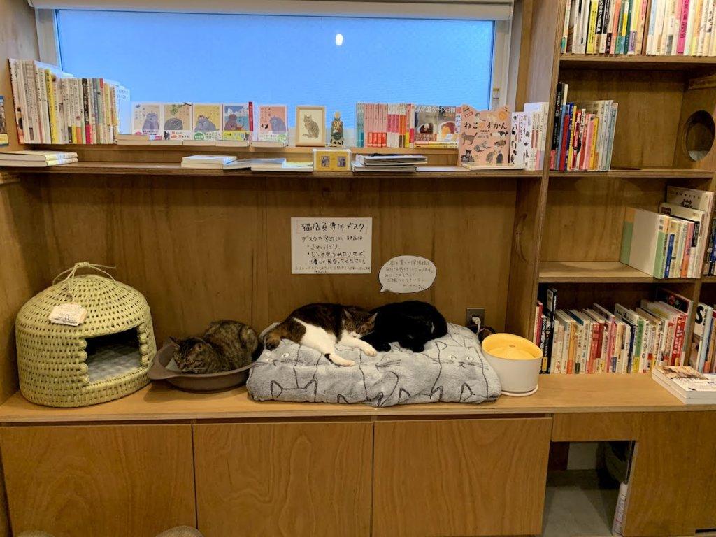 猫本屋 Cat'sMeowBooks キャットミャウブックス 2021年 福袋 三軒茶屋 西太子堂