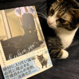 警備員さんと猫 尾道市立美術館 ケンちゃん ゴッちゃん キジ白 猫マンガ にごたろ モチャ