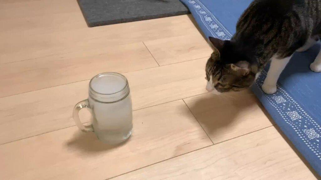 ドライアイス スモーク 二酸化炭素 煙 猫 キジ白