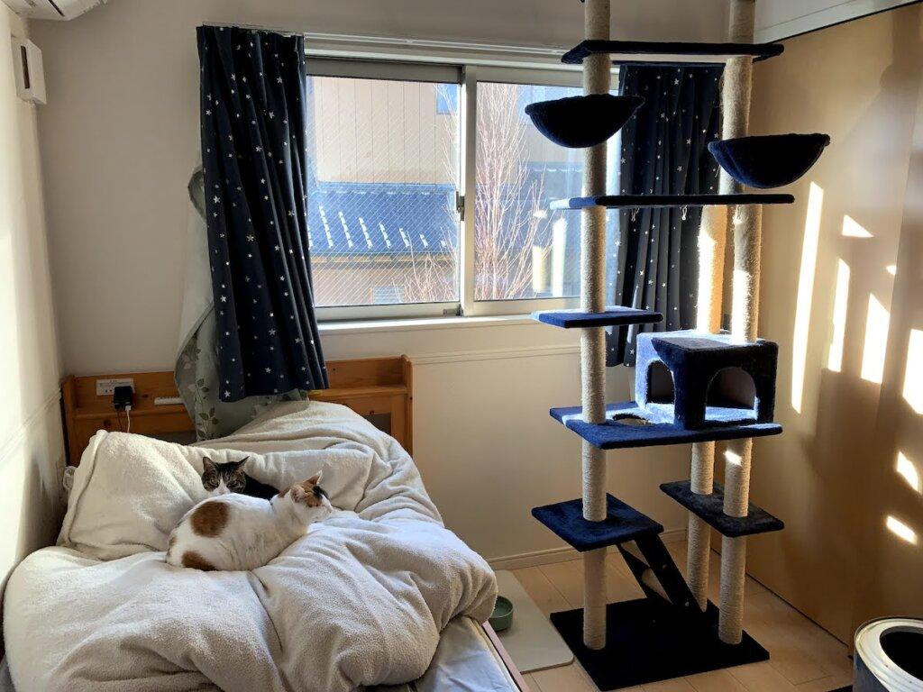 猫 留守番 三毛猫 部屋 キジ白  キャットタワー