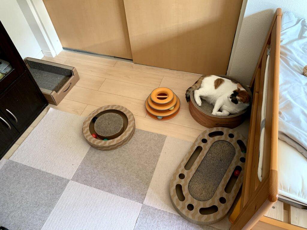 猫 留守番 三毛猫 部屋 おもちゃ 爪とぎ