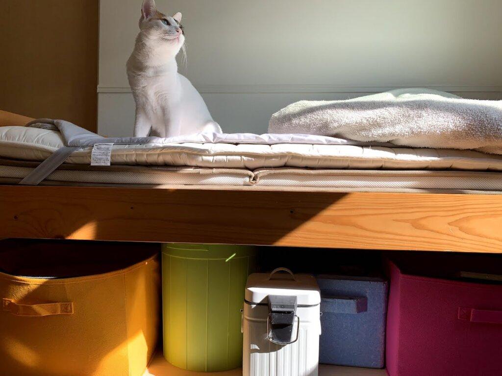 猫 留守番 三毛猫 部屋 ベッド下
