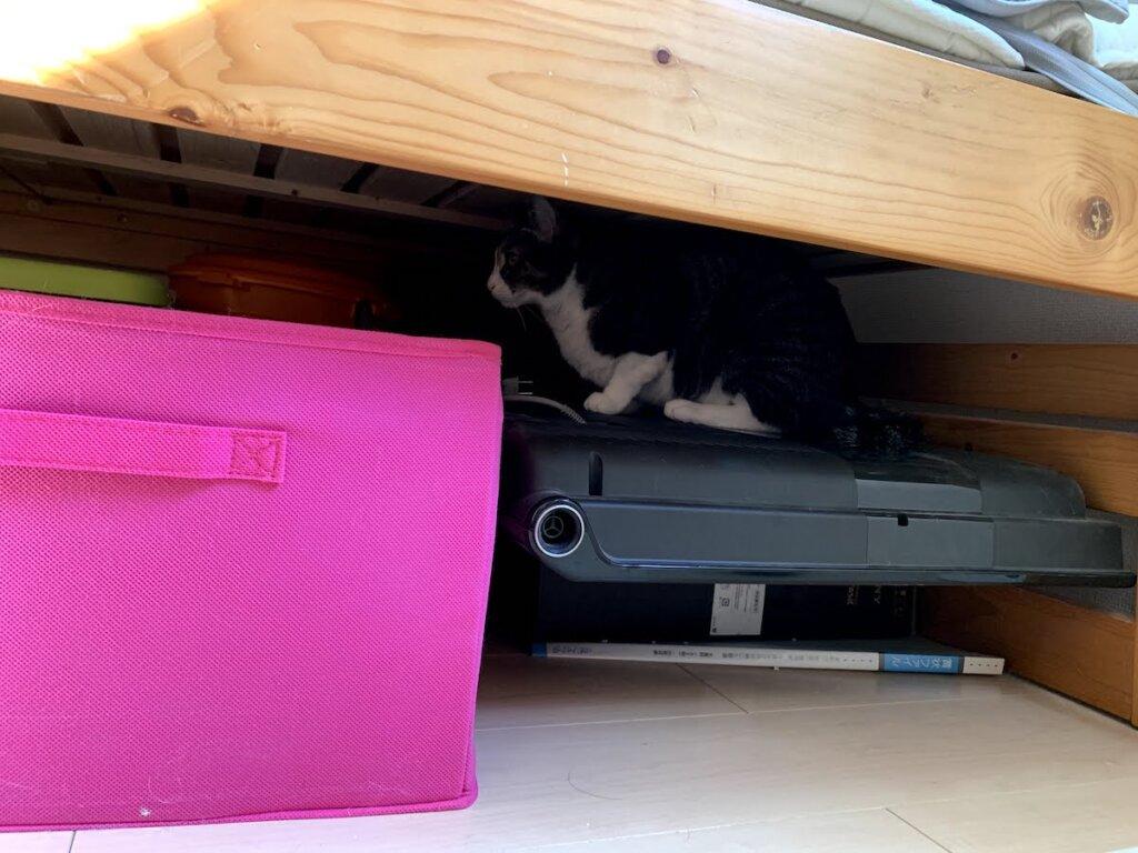猫 留守番 キジ白 部屋 ベッド下
