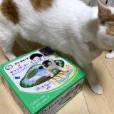 猫壱 ドンキ限定 キャッチミーイフユーキャン2 自動猫じゃらし 猫のおもちゃ 三毛猫 保護猫 元野良猫 限定色