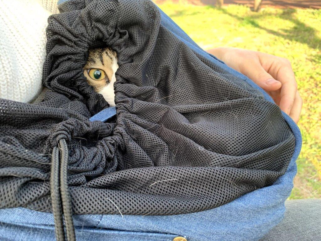 花見 猫 散歩 キャリーバッグ スリング キジ白