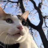 レビュー 猫 散歩 キャリーバッグ スリング 感想 三毛猫
