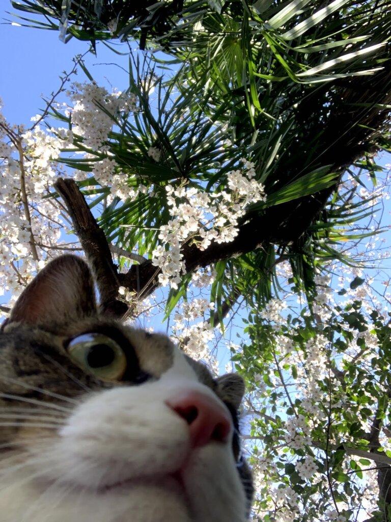 レビュー 猫 散歩 キャリーバッグ スリング 感想 キジ白 花見