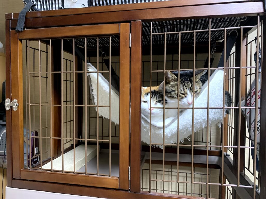 猫 ハンモック ケージ キジ白 三毛猫