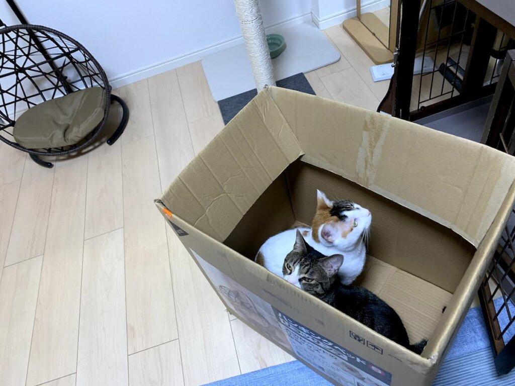 ハンギングベッド ハンモック チェア コーナン 猫 三毛猫 キジ白