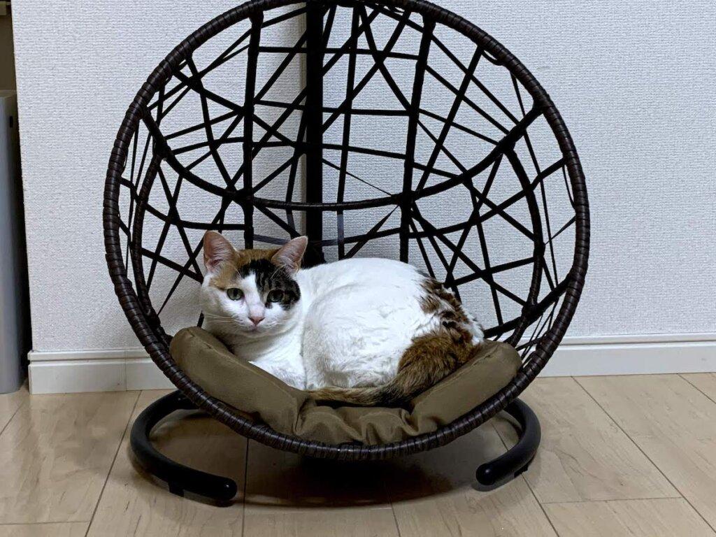 ハンギングベッド ハンモック チェア コーナン 猫 三毛猫