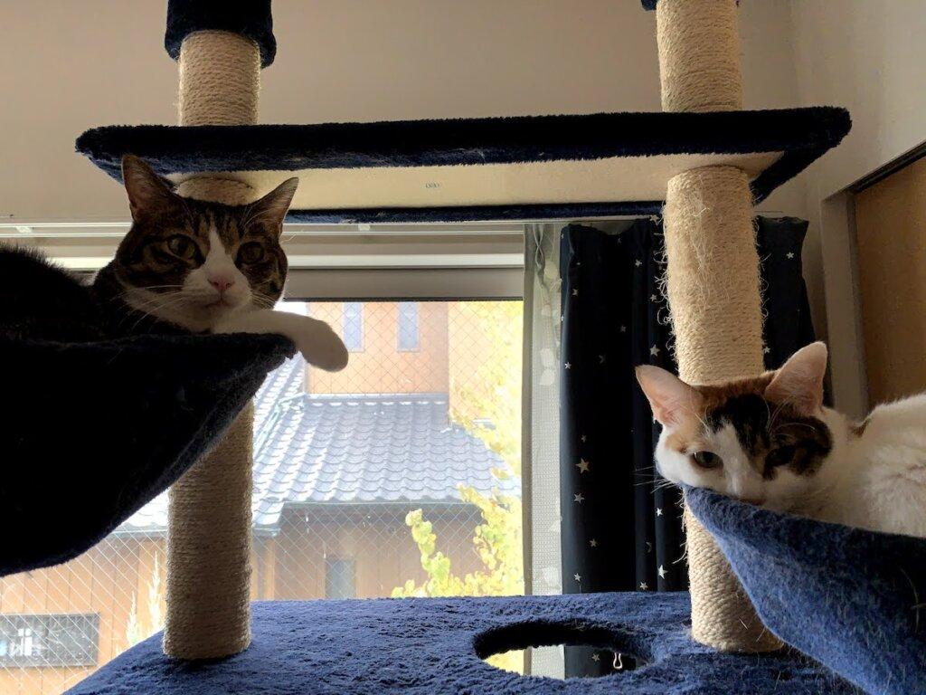 猫 ハンモック キャットタワー キジ白 三毛猫