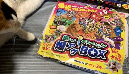 猫ちゃんテンション爆アゲBOXで狩猟本能が目覚めて爆絶フルスロットル!?