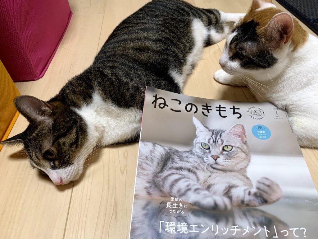 ねこのきもち  2021 7月号 掲載 デビュー 雑誌デビュー 載った 三毛猫 猫雑誌 肉球 キジ白