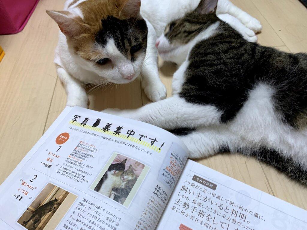 ねこのきもち  2021 7月号 掲載 デビュー 雑誌デビュー 載った 三毛猫 猫雑誌 肉球