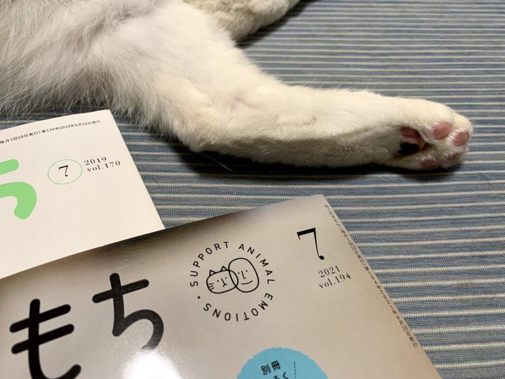 ねこのきもち  2021 7月号 掲載 デビュー 雑誌デビュー 載った 三毛猫 猫雑誌