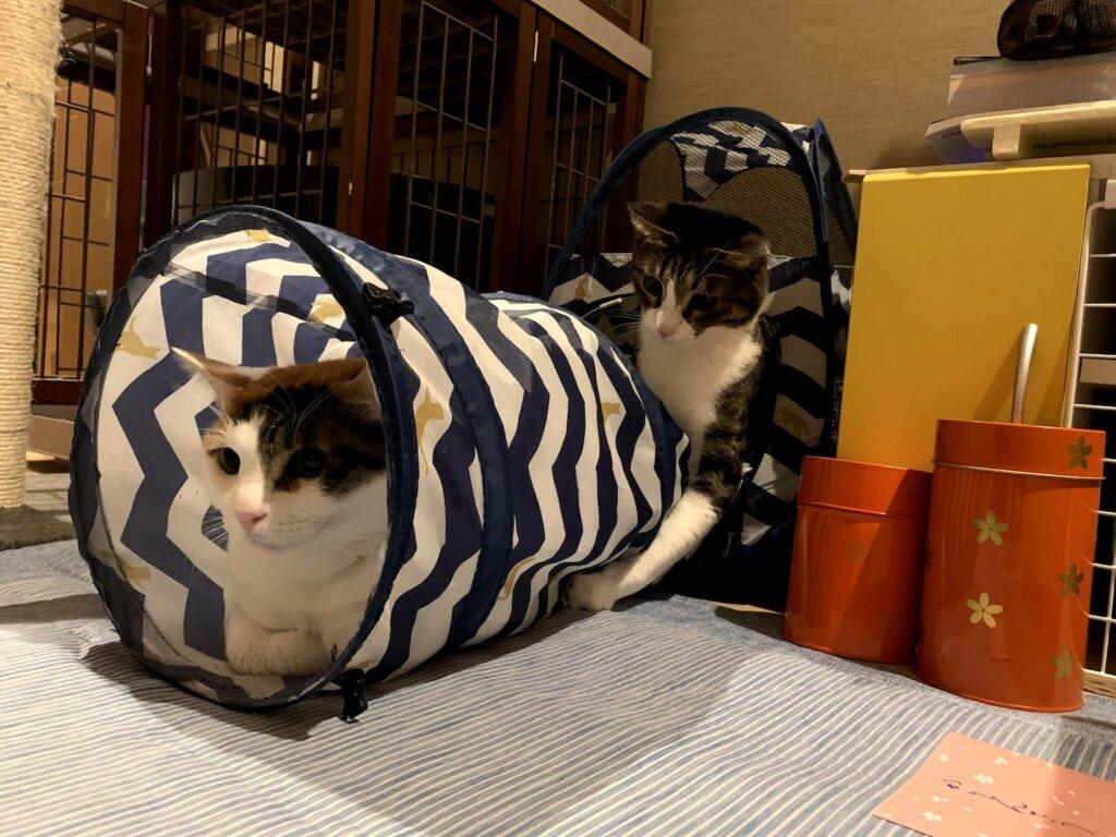 猫 おもちゃ トンネル テント ハウス キジ白 三毛猫