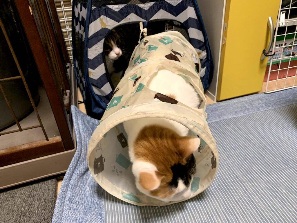 猫 おもちゃ トンネル テント ハウス ねこのきもち キジ白 三毛猫 保護猫