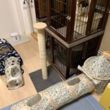 猫 おもちゃ トンネル テント ハウス キジ白 三毛猫 保護猫