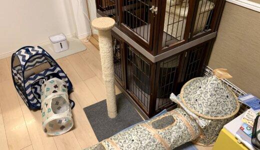 【レビュー】猫用トンネルテントハウスを購入!ありそうであまりない組み合わせの商品ですが我が家の猫のお気に入りです!