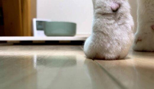 猫の水飲み場に使っている珪藻土マットのカビ対策に100均のすのこを使ってみた!通気性アップしていい感じのはず!