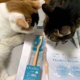 オーラバイオブラシ OraBioBrush 猫 歯ブラシ 歯磨き 歯みがき 三毛猫 キジ白 レビュー 感想
