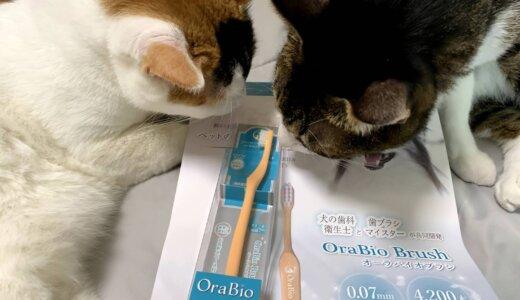 【レビュー】猫もOKな犬用歯ブラシ「OraBioBrush(オーラバイオブラシ)」で歯を磨いてみた感想!