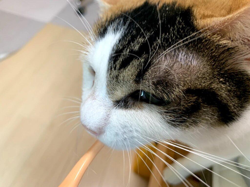 オーラバイオブラシ OraBioBrush 猫 歯ブラシ 歯磨き 歯みがき 三毛猫 レビュー 感想